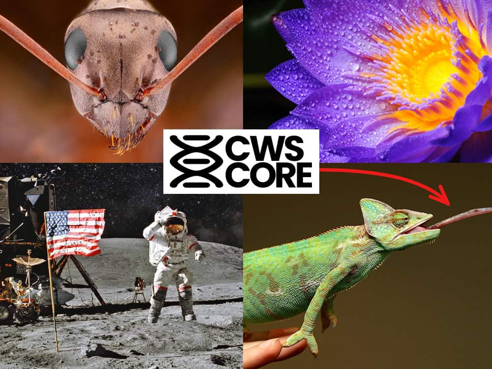 Crosswired Science Core Curriculum